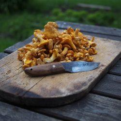 5 goda matsvampar att plocka nu