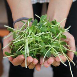 Skott och groddar – odla snabbt och lätt året om